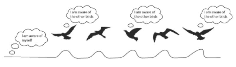 bird-awarness